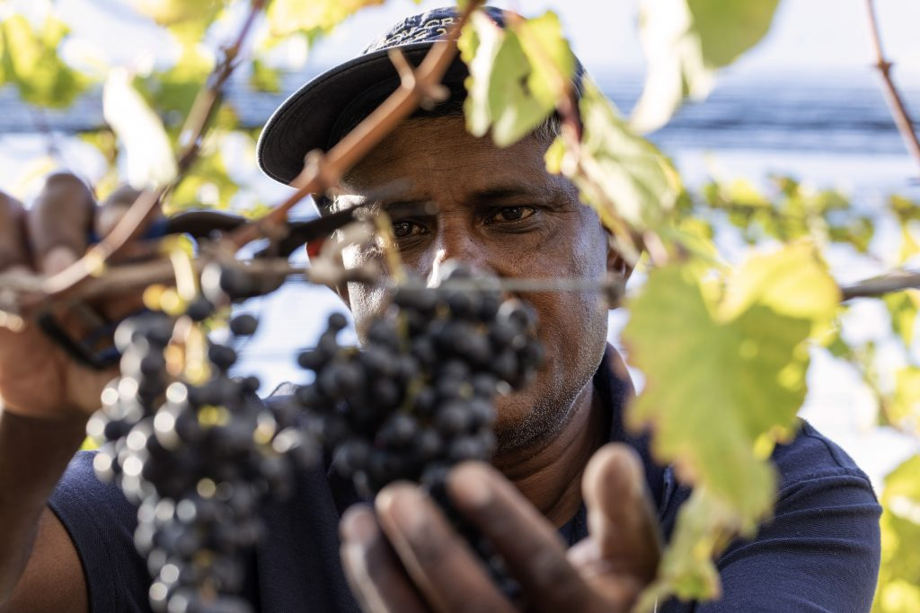 Climate, water and wine Deep South Challenge